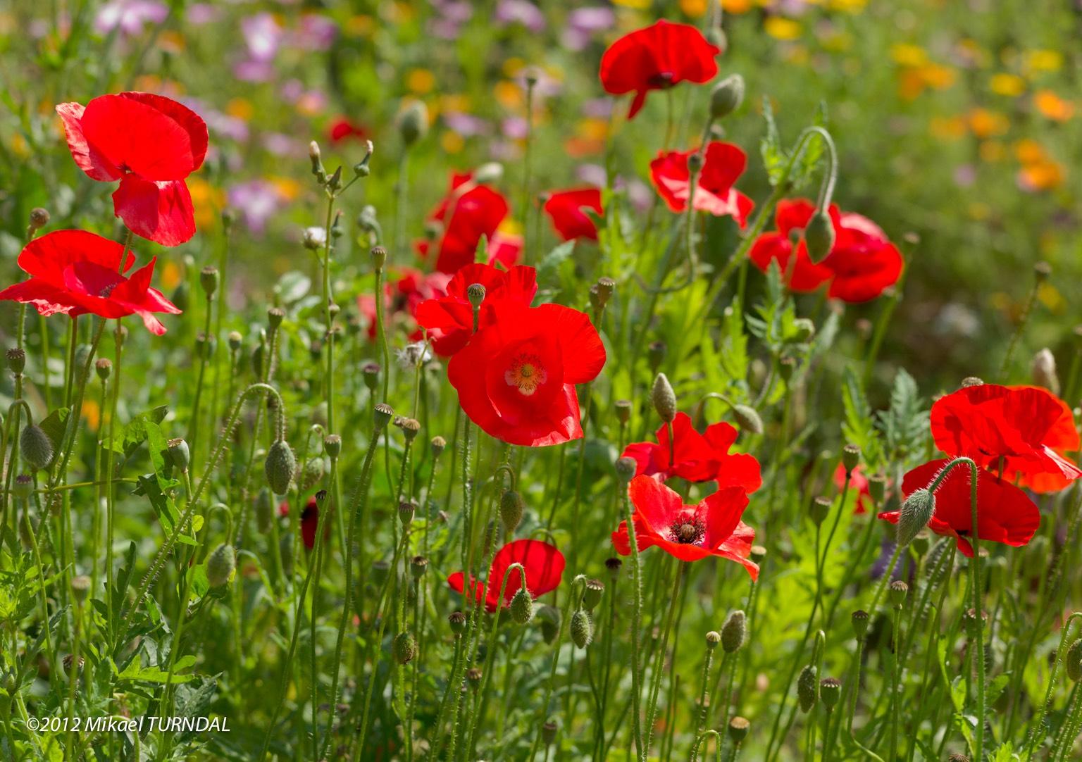 Le jardin botanique parcs et jardins celui qui plante for Le jardin qui dit non