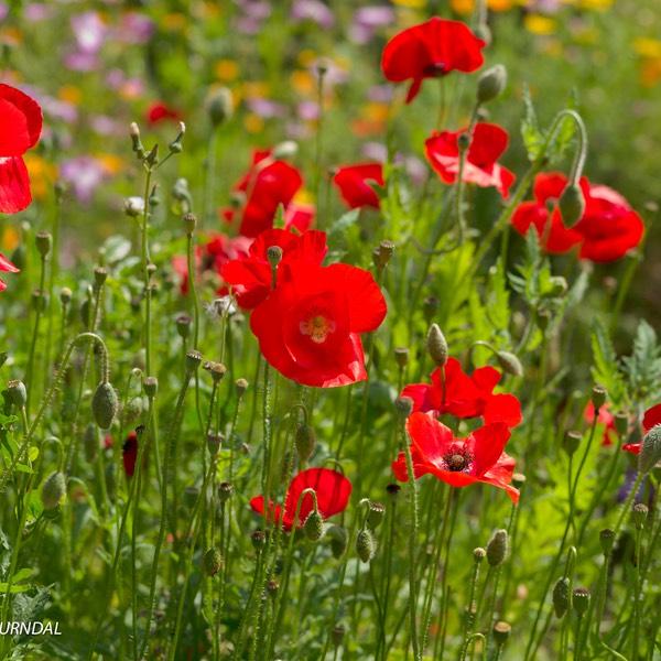 Le jardin botanique parcs et jardins celui qui plante for Plante 21 en ligne